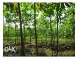 Tanah Produktif Luas 4.06 Ha