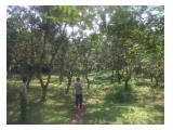 Dijual Tanah Murah Di Lingkungan Asri