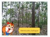 Dijual Tanah Beserta Pohon Jati di Tulungagung