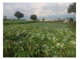 Dijual Tanah Luas 20000 m2 Dpl 1400 di Cipanas Puncak Desa Cipendawa Cianjur