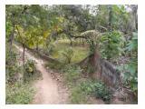 Jual Tanah kebun 12,4 are di Desa Bengkala, Buleleng, Bali Utara