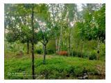 Dijual Tanah di Tabanan Bali - Luas 11,080 m2